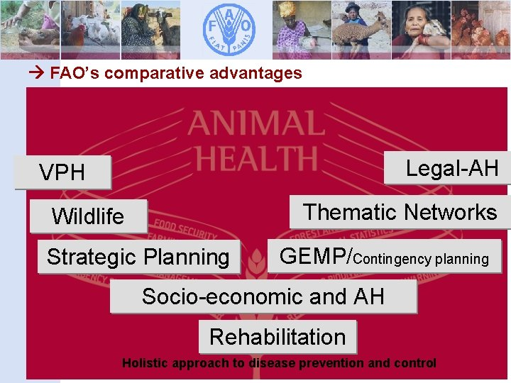 FAO's comparative advantages FAO legal assistance in Legal-AH VPH drafting legislation Thematic Networks