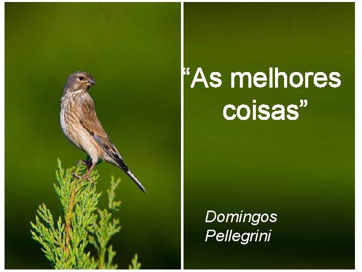 """""""As melhores coisas"""" Domingos Pellegrini"""
