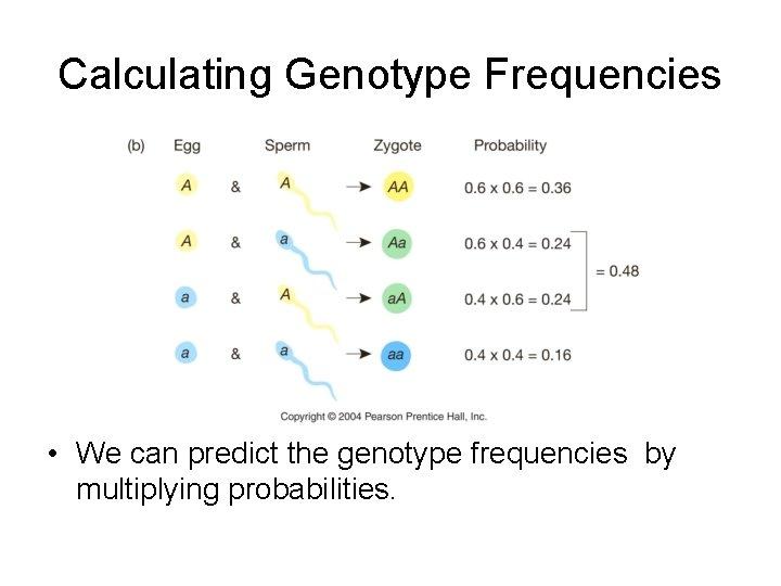 Calculating Genotype Frequencies • We can predict the genotype frequencies by multiplying probabilities.