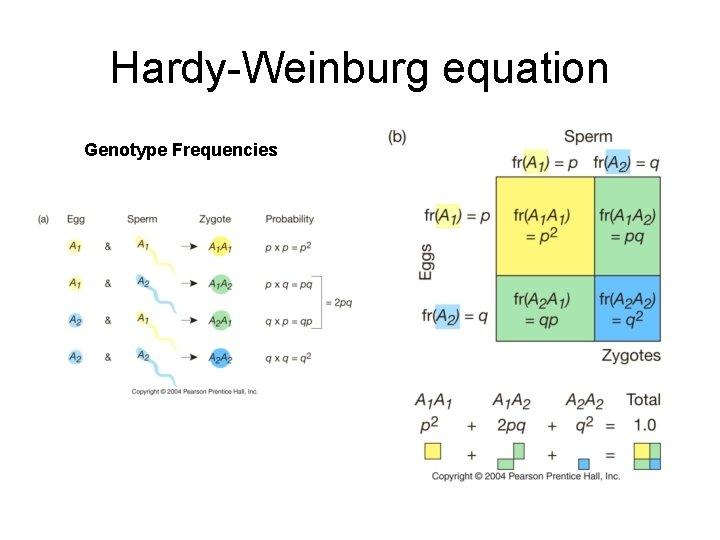 Hardy-Weinburg equation Genotype Frequencies