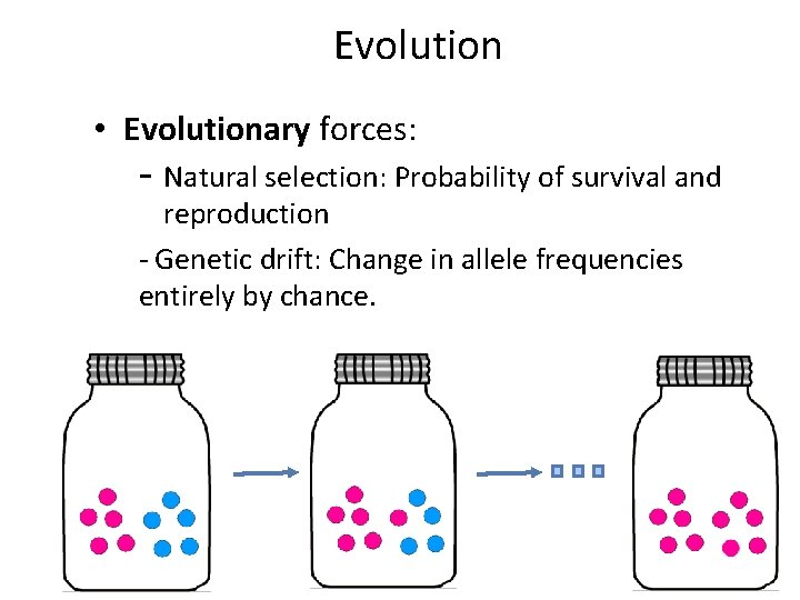 Evolution • Evolutionary forces: - Natural selection: Probability of survival and reproduction - Genetic