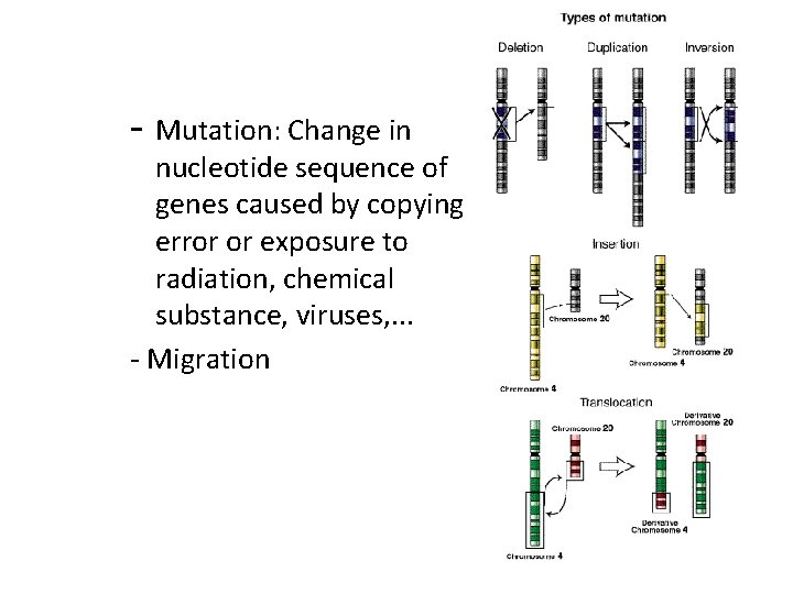 - Mutation: Change in nucleotide sequence of genes caused by copying error or exposure