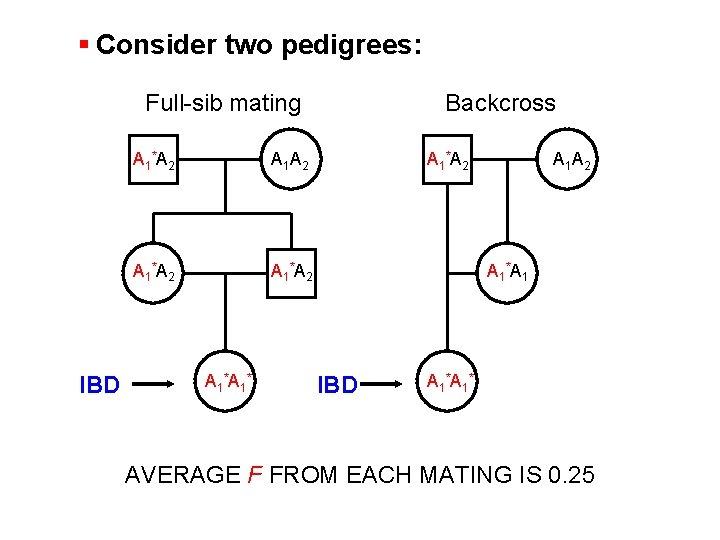 § Consider two pedigrees: Full-sib mating IBD A 1 *A 2 A 1 *A