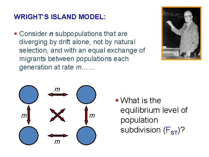 WRIGHT'S ISLAND MODEL: § Consider n subpopulations that are diverging by drift alone, not