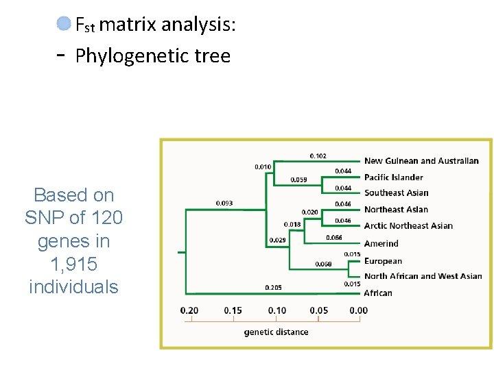 - Fst matrix analysis: Phylogenetic tree Based on SNP of 120 genes in 1,