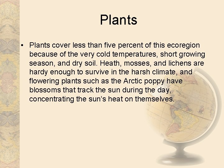 Plants • Plants cover less than five percent of this ecoregion because of the