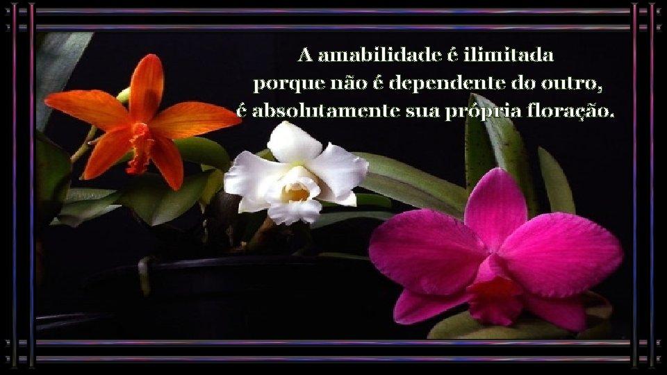 A amabilidade é ilimitada porque não é dependente do outro, é absolutamente sua própria