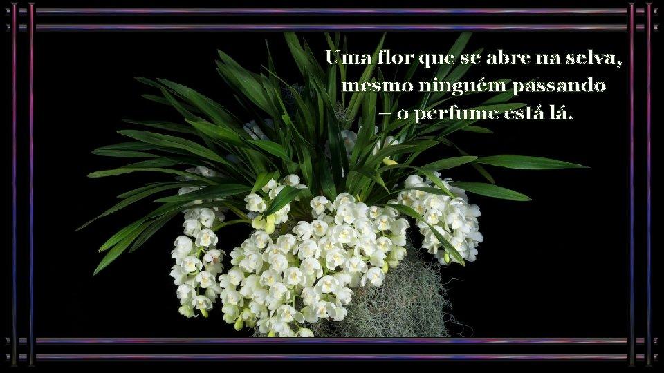 Uma flor que se abre na selva, mesmo ninguém passando – o perfume está