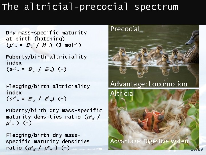 The altricial-precocial spectrum Dry mass-specific maturity at birth (hatching) (μb. H = Eb. H