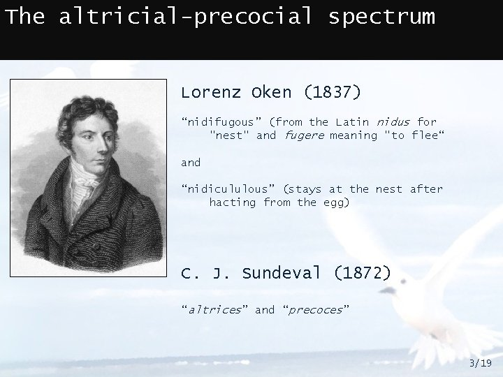 """The altricial-precocial spectrum Lorenz Oken (1837) """"nidifugous"""" (from the Latin nidus for """"nest"""" and"""