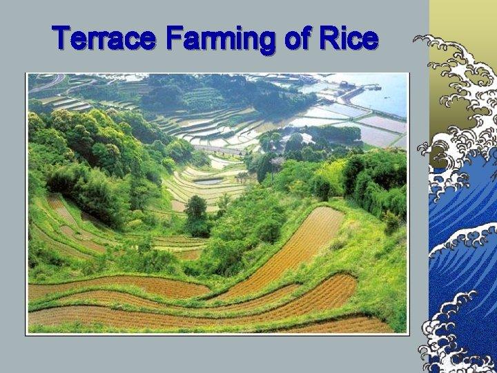Terrace Farming of Rice