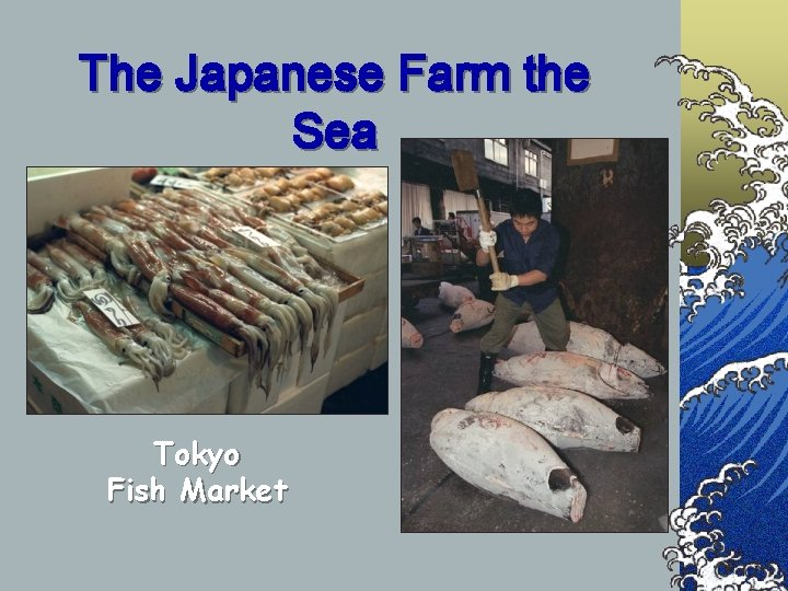 The Japanese Farm the Sea Tokyo Fish Market