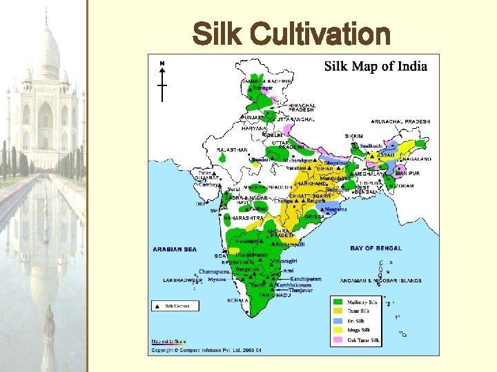 Silk Cultivation