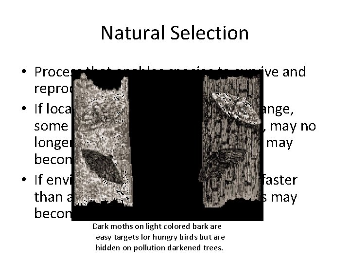Natural Selection • Process that enables species to survive and reproduce in a local