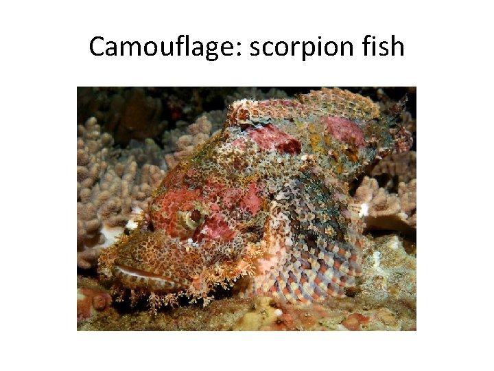 Camouflage: scorpion fish