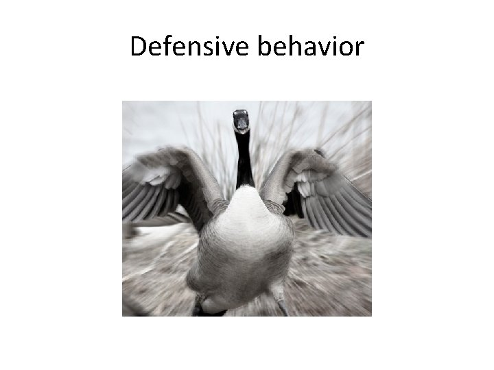 Defensive behavior