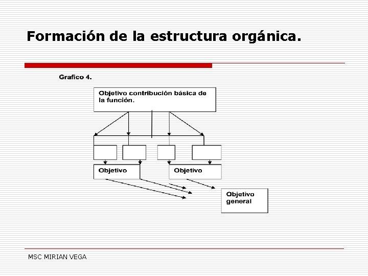 Formación de la estructura orgánica. MSC MIRIAN VEGA