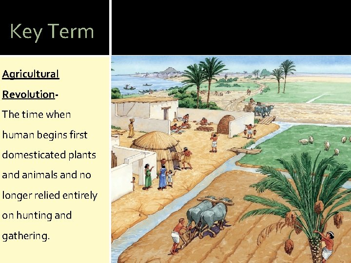 Key Term Agricultural Revolution. The time when human begins first domesticated plants and animals