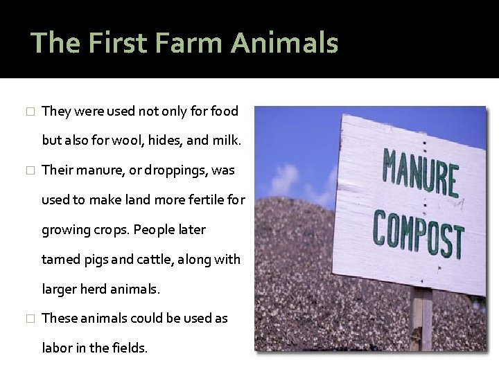 The First Farm Animals � They were used not only for food but also