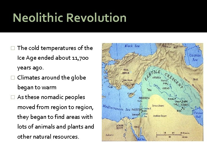 Neolithic Revolution � The cold temperatures of the Ice Age ended about 11, 700