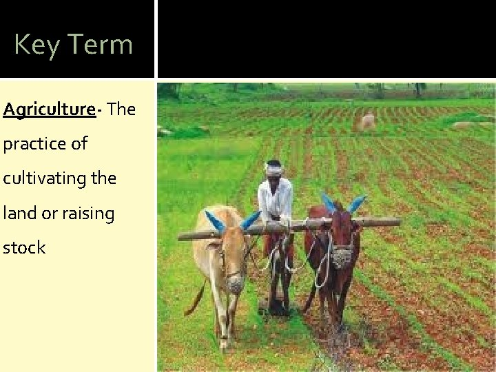 Key Term Agriculture- The practice of cultivating the land or raising stock