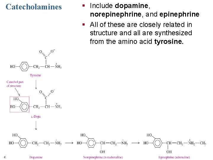 Catecholamines © 2013 Pearson Education, Inc. § Include dopamine, norepinephrine, and epinephrine § All