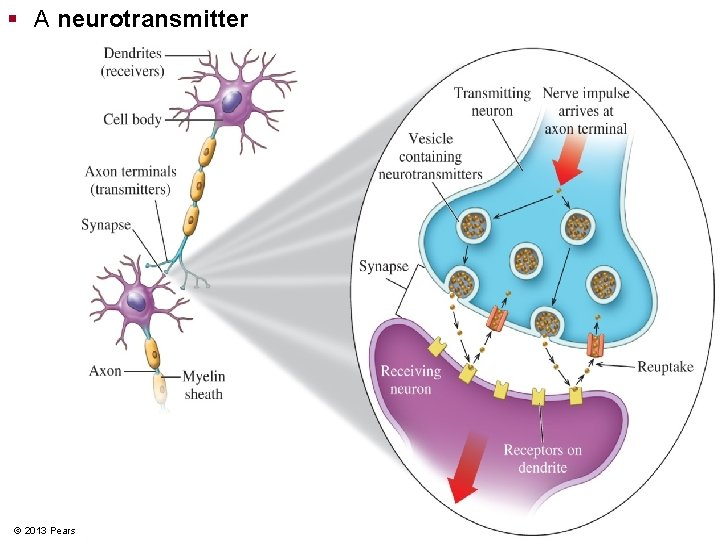 § A neurotransmitter © 2013 Pearson Education, Inc. Chapter 18, Section 6 5