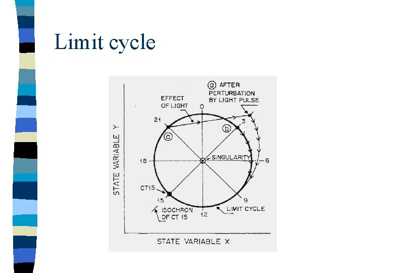 Limit cycle