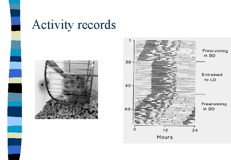 Activity records