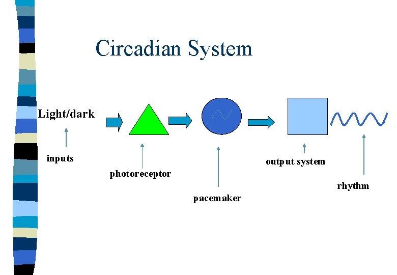 Circadian System Light/dark inputs output system photoreceptor rhythm pacemaker