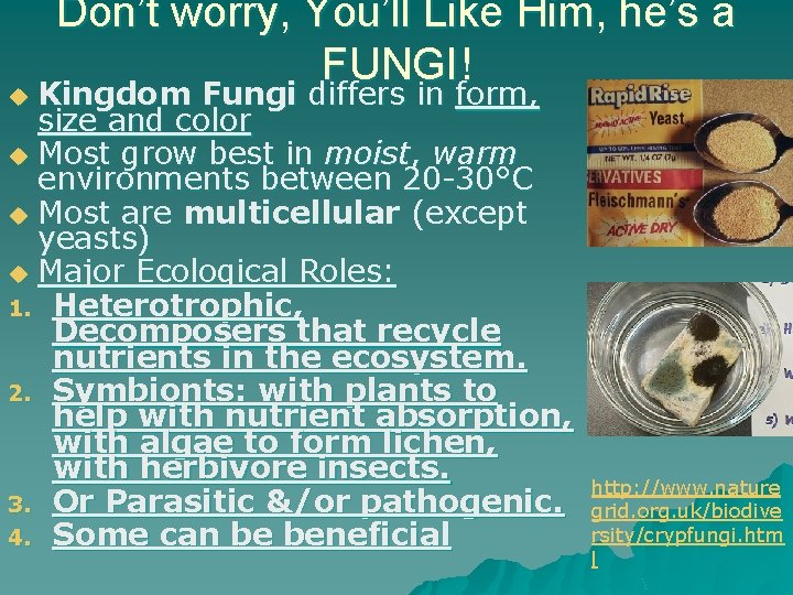 Don't worry, You'll Like Him, he's a FUNGI! Kingdom Fungi differs in form, size
