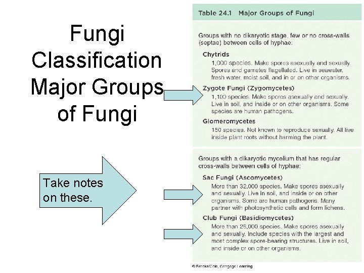 Fungi Classification Major Groups of Fungi Take notes on these.