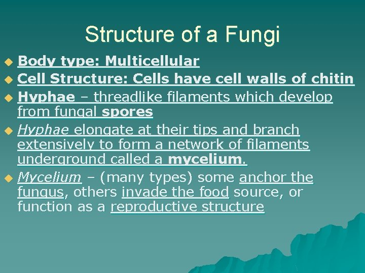 Structure of a Fungi Body type: Multicellular u Cell Structure: Cells have cell walls
