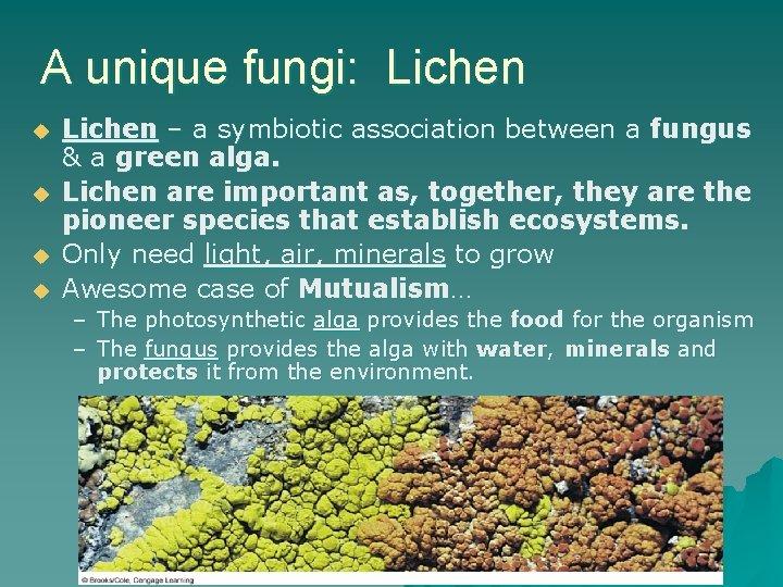 A unique fungi: Lichen u u Lichen – a symbiotic association between a fungus