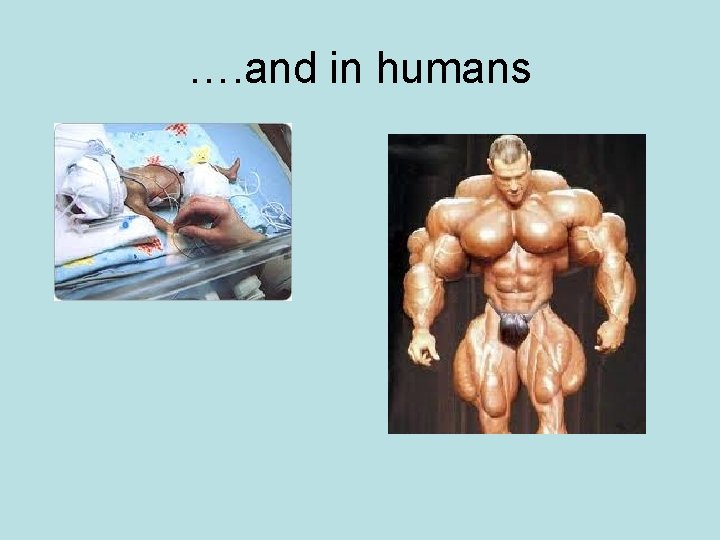 …. and in humans