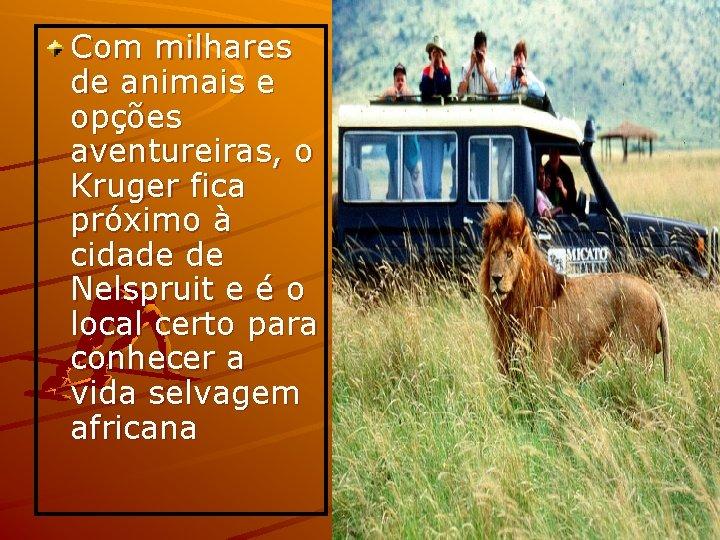 Com milhares de animais e opções aventureiras, o Kruger fica próximo à cidade de