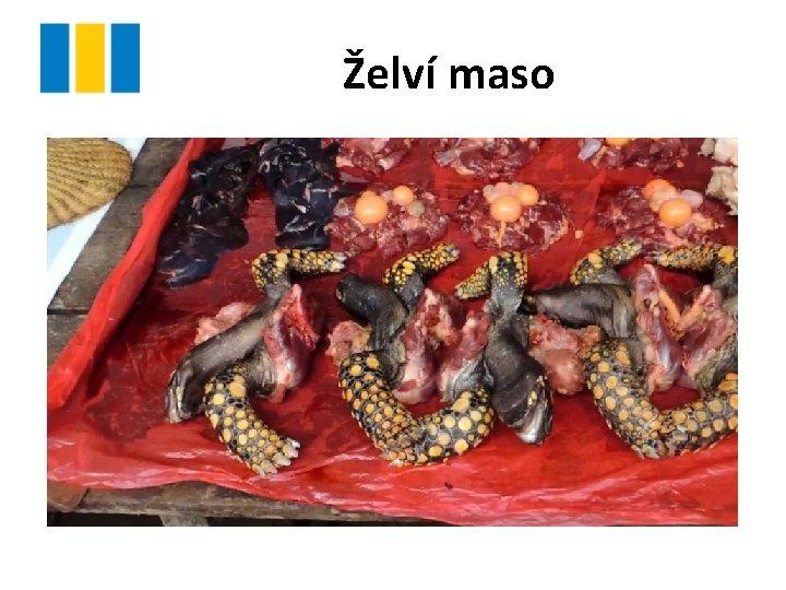 Želví maso