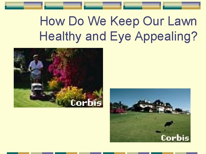 How Do We Keep Our Lawn Healthy and Eye Appealing?