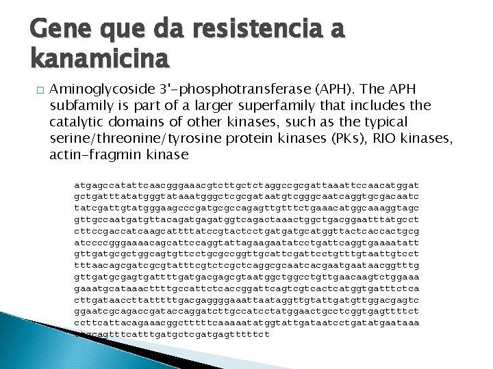 Gene que da resistencia a kanamicina � Aminoglycoside 3'-phosphotransferase (APH). The APH subfamily is