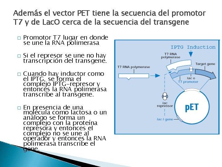 Además el vector PET tiene la secuencia del promotor T 7 y de Lac.