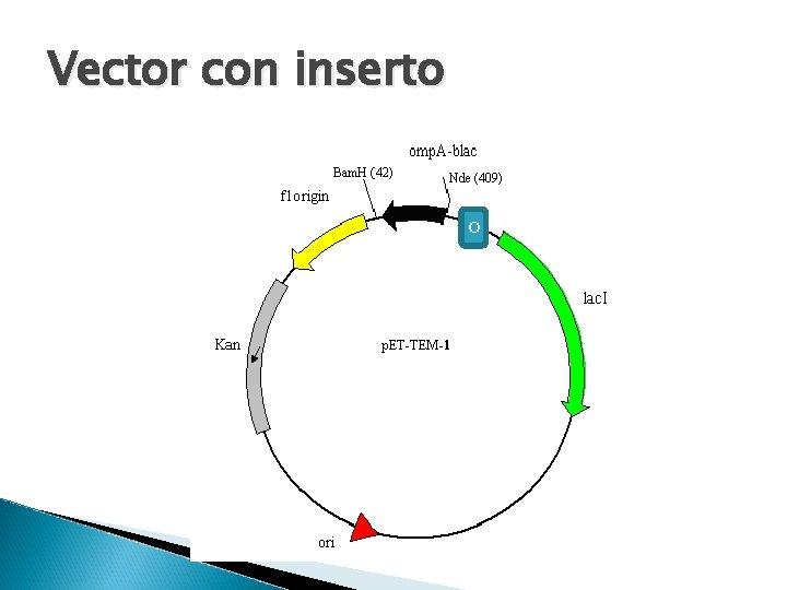 Vector con inserto o