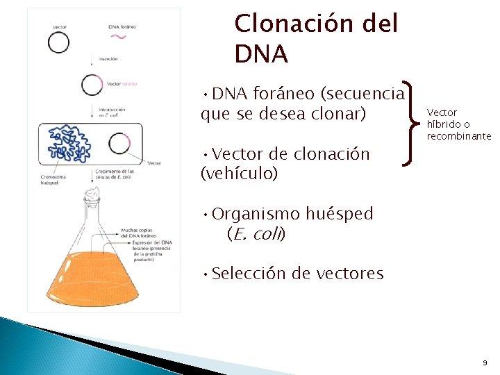 Clonación del DNA • DNA foráneo (secuencia que se desea clonar) • Vector de