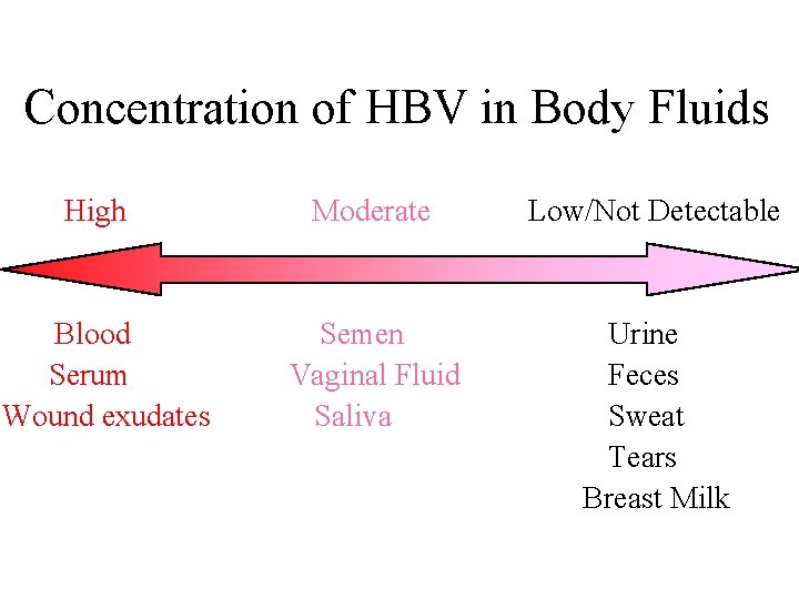 Concentration of HBV in Body Fluids High Blood Serum Wound exudates Moderate Low/Not Detectable