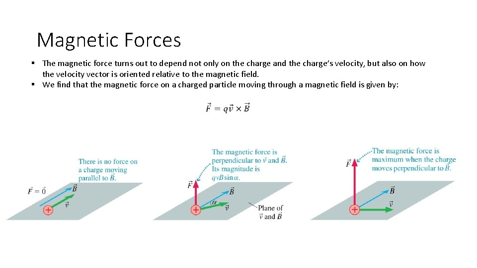 Magnetic Forces § The magnetic force turns out to depend not only on the