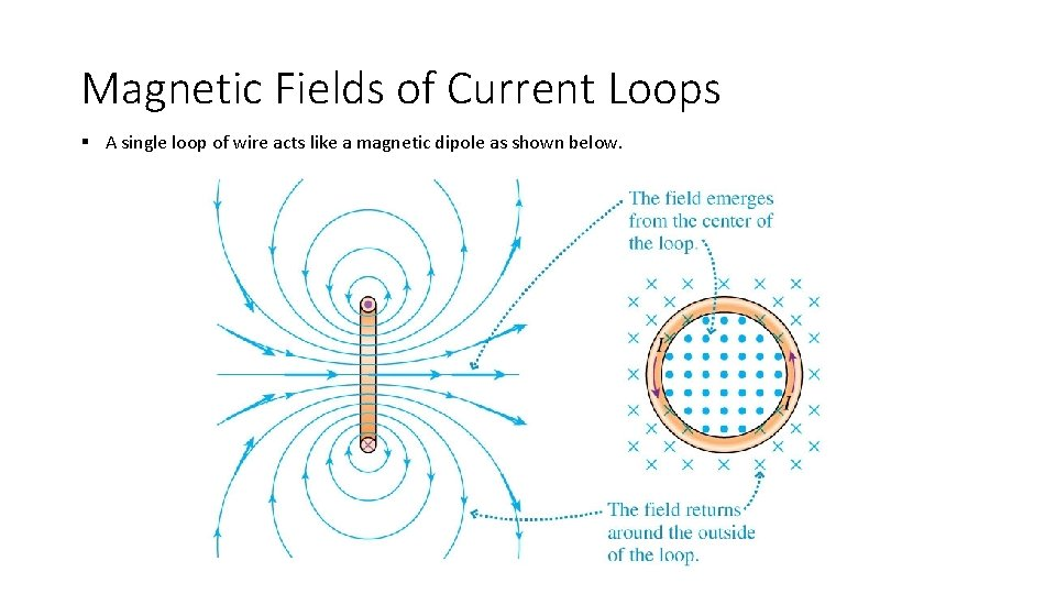 Magnetic Fields of Current Loops § A single loop of wire acts like a