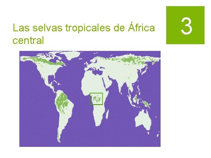 Las selvas tropicales de África central 3
