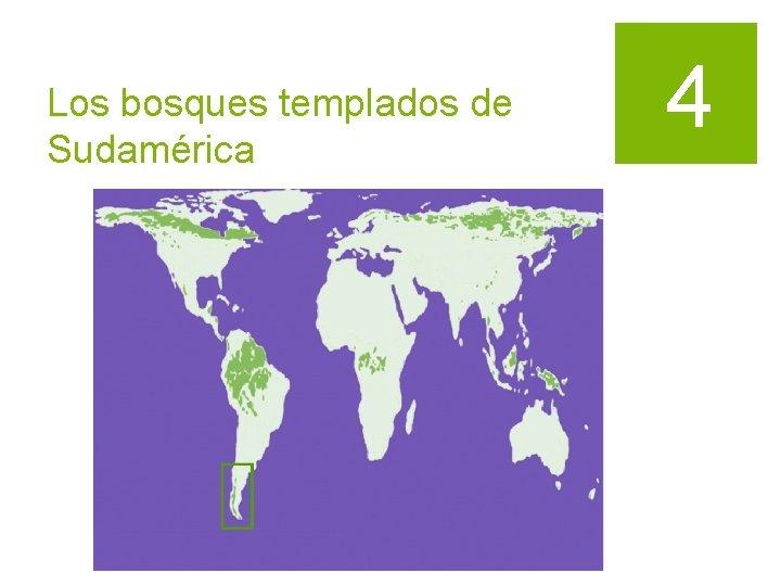 Los bosques templados de Sudamérica 4