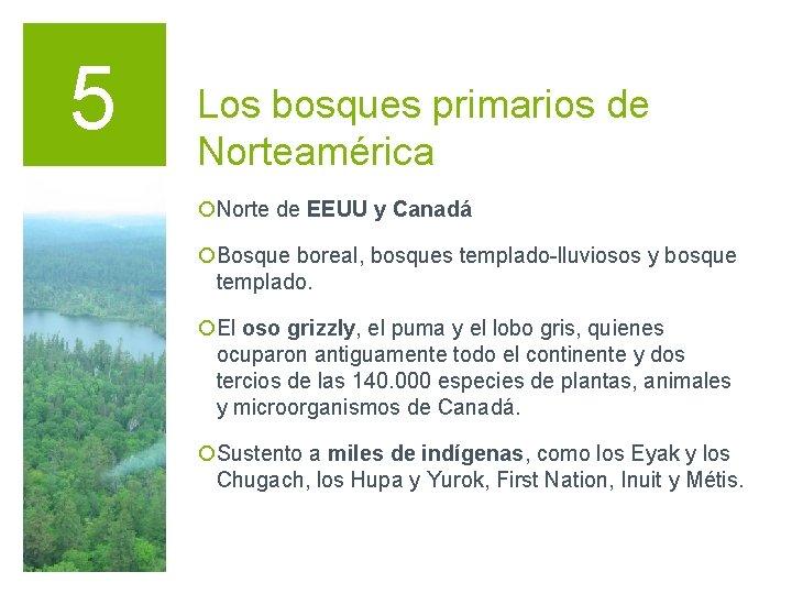 5 Los bosques primarios de Norteamérica ¡Norte de EEUU y Canadá ¡Bosque boreal, bosques