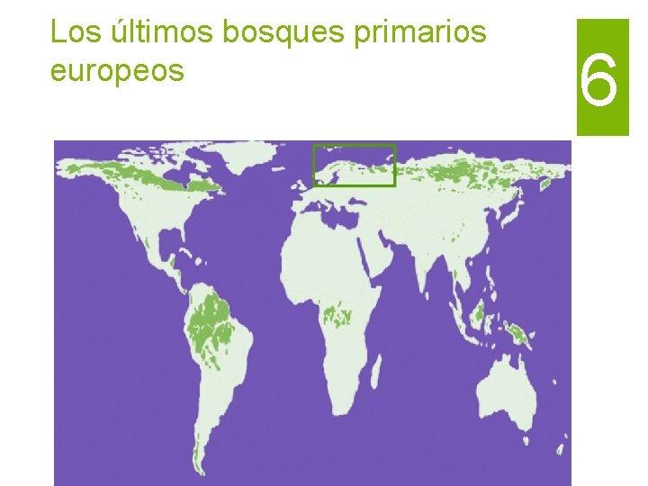 Los últimos bosques primarios europeos 6