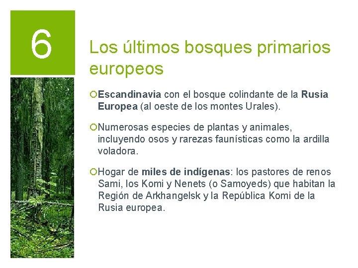 6 Los últimos bosques primarios europeos ¡Escandinavia con el bosque colindante de la Rusia